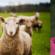 heidi-lamb-slide